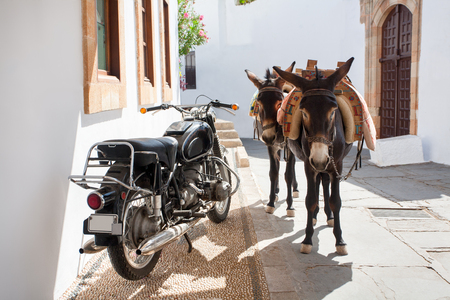Greek donkeys - the tourist symbol of the town of Lindos, Rhodes Island. Greece