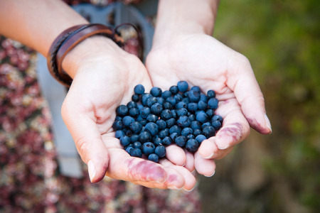 Fresh ripe blueberries in the woman hands with background of grass. The concept of summer and outdoors. Reklamní fotografie