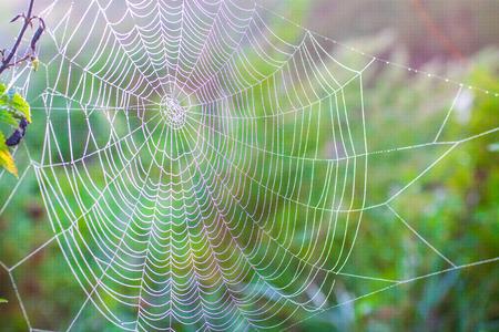spinnenweb met waterdruppeltjes macro, in zonlicht, in de zomer, groene achtergrond Stockfoto