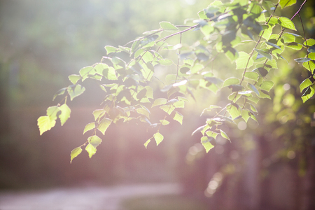 tender green branch in the sunlight, a symbol of spring, nature blooms Reklamní fotografie