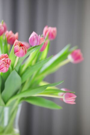 Beautiful bouquet of spring pink flowers tulips close-up. Gentle floral template background with free space for text
