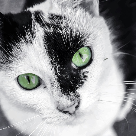 domestic cat: Watercolor black and white cat portrait with green eyes. Illustration