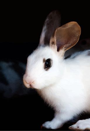 black eyes: Marrone acquerello e coniglio bianco ritratto con gli occhi neri. Vettoriali