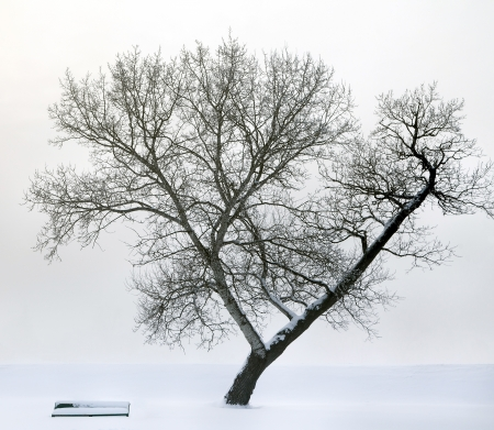 Bench next to large lone tree surrounded by fog and snow photo