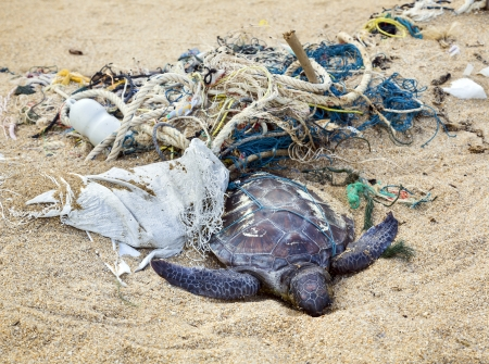 sea pollution: Dead turtle entangled in fishing nets on the ocean Stock Photo