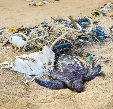 sea poison: Dead turtle entangled in fishing nets on the ocean Stock Photo