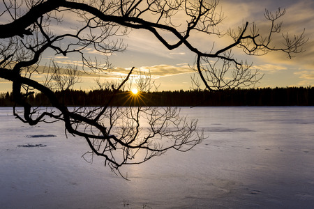 Silhouette of branching tree over a frozen lake at sunset in winter evening photo