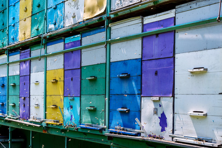 Mobile apiary of different colors and many bee flying in the air photo