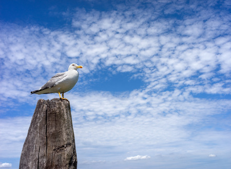 wood pillars: White seagull sitting on wooden pillar against the blue sky and clouds