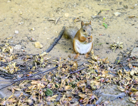 Squirrel eating nuts in the woods in conservation area photo