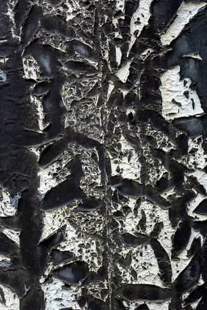 tar paper:  roofing of the old tar paper material on outdoor surface closeup