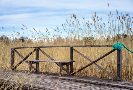 Old wooden bench in the coastal zone on dry grass background photo