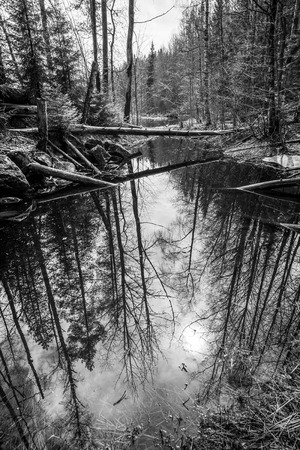 black forest: Beautiful landscape with dry tree, fallen over the backwater near the river in the forest of Karelia.  Black and white photo Stock Photo