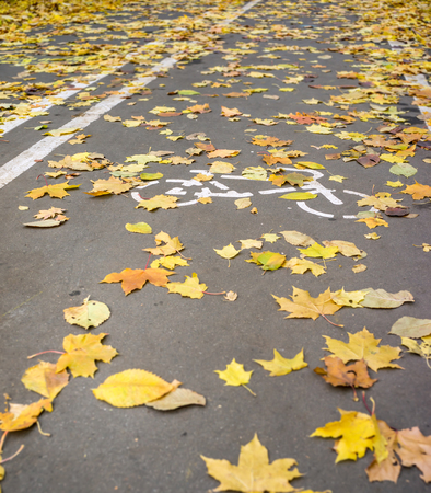 street signs: Road sign on asphalt for the ride cyclists and fallen autumn leaves
