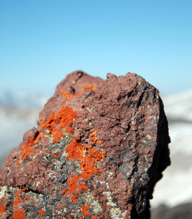 stone volcanic stones: Moss and lichen on stone surface of volcanic rock closeup in mountains of Elbrus