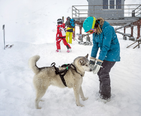 mans best friend: Young woman snowboarder playing with the dog breed  siberian Husky in mountains of ski resort. Dog is mans best friend