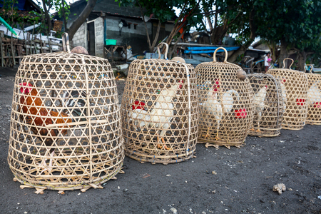 Roosters in cage, made from weave bamboo in the village