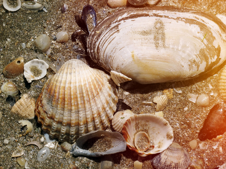 Sea shells of different sizes in the sand on the sea shore near the water closeup