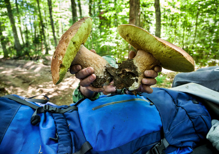 Large white mushrooms man is holding in his hands in the background of forest