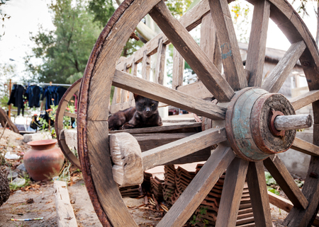 Domestic cat lying on old wooden bench cart with big wheels in the countryside