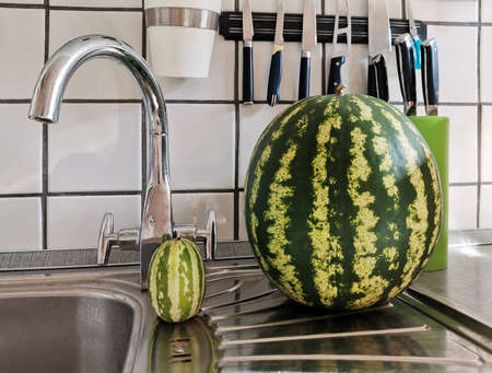 Clean ripe watermelon in comparison with small hybrid of watermelon and melon in the sink in the kitchen closeup Standard-Bild