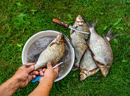 Women's hands cleaning fresh fish from scales in plate of water on background of green grass