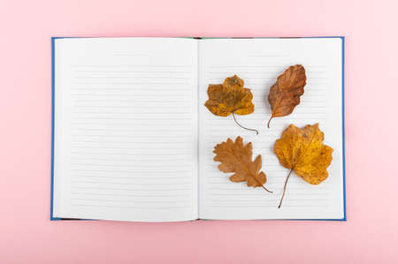 The minimal concept on a pink backdrop. Flat lay photo of notebook and leaves in a fall theme.