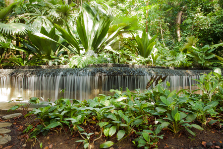 surroundings: little Waterful, fresh artificial water cascade with rainforest surroundings in Singapores Botanical garden
