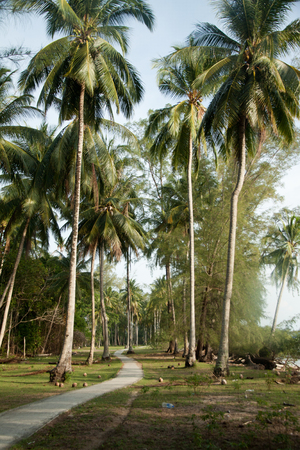 pulau: View of nice tropical background with coconut palms with a grass way on Pulau Sibu Island, Malaysia. Stock Photo