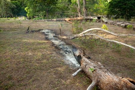 Burning lonely tree seen on a malaysian island Stock Photo