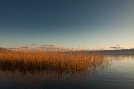 common reed: sunset in the nature of Ohrid mazedonia, europe Stock Photo