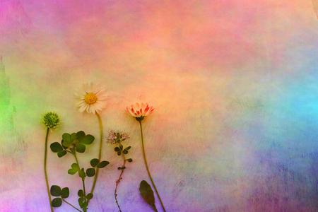 Fleurs de prairie sur fond de couleur arc-en-ciel dans le cru Banque d'images - 82440020