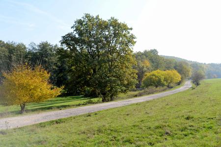 Dead tree in the meadow in early fall