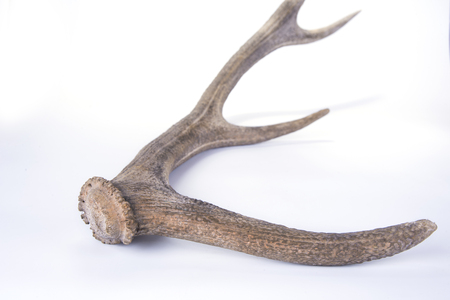 One part of dear antlers on the white