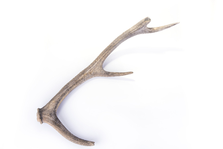One part of dear antlers on the white Stock Photo - 124696811