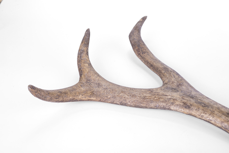 One part of dear antlers on the white Stock Photo - 124696857