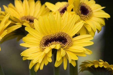 anomalous: Seasonal spring flower in the sicilian hinterland. Anomalous flower. Stock Photo
