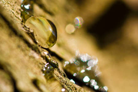 horizont: A macro photography of an resin drop on a pine tree