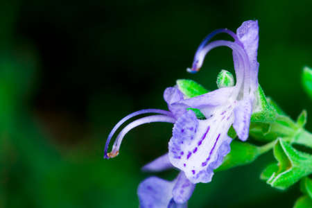 macrophotography: Macrophotography of an lavander flower Stock Photo