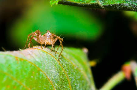 macrophotography: Extreme macrophotography of an spider on leaf