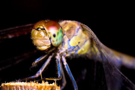 macrophotography: Extreme macrophotography of an dragonfly on an wood