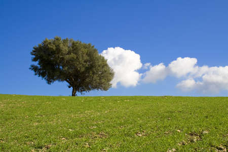 Suggestive country landscape with a isolated tree and clouds