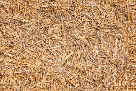 Seamless texture hay, straw
