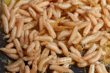 Many living larvae for fishing,maggots, bait, worms 스톡 콘텐츠
