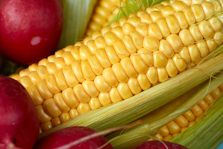 Red radish, yellow corn and cauliflower. The concept of fresh juicy vegetables.
