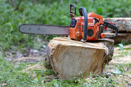 Professional chainsaw on a sawn tree in the forest