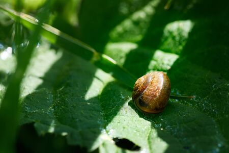 Snail on the sheet of grass. sunny day. Stock Photo