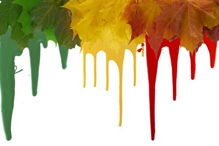 bright maple leaves with paint with smudges on the top edge of the frame. copy space                                Reklamní fotografie