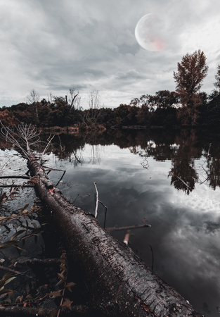 Tree in a Lake with water reflection - Moon in the Sky