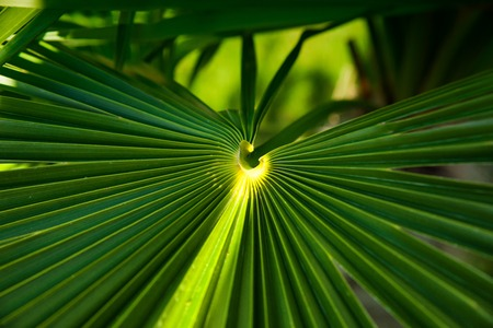 fresh Green Palm leave background in summer
